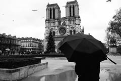 Souvenirs de Noël (Pierrot le chat) Tags: paris france 75004 notredame blackandwhite noiretblanc pluie rain parapluie umbrella streetphotography