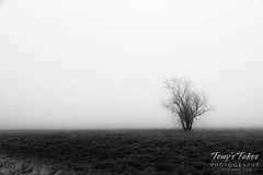 December 26, 2019 - A lonely tree in the fog. (Tony's Takes)