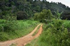 Vicinal (Márcia Valle) Tags: belmirobraga juizdefora minasgerais brasil brazil green verde nature natureza nikon d5100 verão summertime estrada estradavicinal estradadeterra