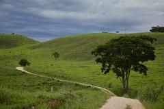 Perspectiva (Márcia Valle) Tags: belmirobraga juizdefora minasgerais brasil brazil green verde nature natureza nikon d5100 verão summertime tree árvore estrada curva road