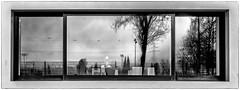 view into a window (ro_ha_becker) Tags: monochrome reflection spiegelung schwarzweiss zwartwit biancoenero blancetnoir blackandwhite blancoynegro fenster window architecture architektur winnenden