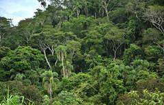 Variedade (Márcia Valle) Tags: belmirobraga juizdefora minasgerais brasil brazil green verde nature natureza nikon d5100 verão summertime mataatlântica mata brazilianforest floresta trees árvores