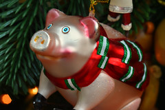 I think I've been a festive porker (PentlandPirate of the North) Tags: christmas holidays pig cochon xmas festive decoration bauble