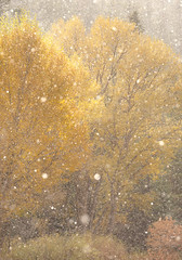 Sunsnowshower, Santa Fe NM 10.24.19 (enchanted_wx) Tags: abqnws santafe santafenm santafeskiarea canon canon6d rokinon135mmf2 snow snowfall sun backlit backlight fall fallcolors fall2019 october october2019 forest golden goldenlandscape gold landofenchantment nm newmexico nmwx nmstorms nmlandscape nmtrue newmexicotrue nmskies weather wx yearinreview yearinreview2019