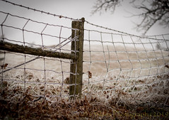 The Escape Plan (HFF) (13skies) Tags: wireandpost post wire hole frozen cleaverrd ice icyconditions fence wireandpostfence cold slippery winter countryroad countryside field sonya99 shadows dof horizon distance hff fencefriday depthoffield happyfencefriday colder drive pointofview