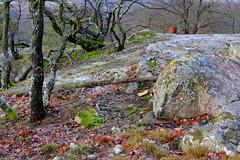 Straning (Harald Reichmann) Tags: straning geisberg fels stein baum topf natur herbst landschaft moos flechte installation alltagskunst
