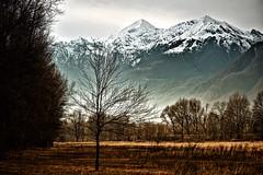 paesaggio invernale (Maurizio Badà) Tags: inverno winter cold albero montagne neve