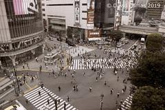 Tokyo - Shibuya - Shibuya Crossing (CATDvd) Tags: nikond7500 日本国 日本 stateofjapan nippon niponkoku nihonkoku nihon japón japó japan estatdeljapó estadodeljapón catdvd davidcomas httpwwwdavidcomasnet httpwwwflickrcomphotoscatdvd july2019 kantōregion kantōchihō regiódekantō regióndekantō 関東地方 tokio tōkyō tokyometropolis tōkyōto tòquio 東京 東京都 shibuya shibuyaku 渋谷区 architecture arquitectura building edifici edificio shibuyacrossing aasia