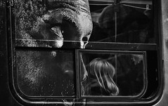 'Close Encounter' (Canadapt) Tags: street streetcar woman window frame ad mural reflection bw toronto canadapt