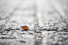 Silver pavement (chibitomu) Tags: leaf light pavement silver tsuchiurashi ibaraki japan 落ち葉 石畳 銀色 土浦市 茨城県 日本 chibitomu