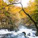 Swallow Falls, Snowdonia National Park, Betws-y-Coed
