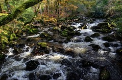 River Plym near Shaugh Bridge, Dartmoor (Baz Richardson) Tags: devon dartmoor riverplym rapids rivers dewerstonewood sssi nationaltrust