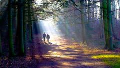 More Sun Rays (howard1916 - Sleepless in Shrewsbury) Tags: sunrays light trees walking thenationaltrust attingham park shropshire england