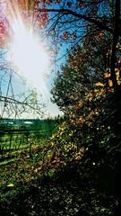 Lasciati illuminare (color raimbow) Tags: sunnymorning sun countryside contrastingcolors autumn autumnview vineyards wood goldenleaves trees landscape italy