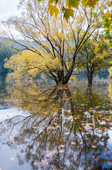 Lake Guy Autumn Bogong Village (laurie.g.w) Tags: lake bogong autumn high country victoria lakebogong colour color yellow fall water trees leaves reflections australia tamron2875mm landscape nikon d700 beauty serene national nationalpark nature