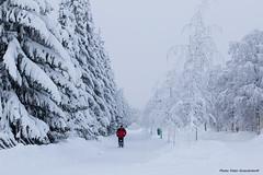 Winter! (petergranström) Tags: approved snow snö people folk trees träd street gata kick spark birches björkar firs granar walkway gångväg