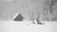 Snowy valley (小川 Ogawasan) Tags: japan japon nature landscape winter valley shirakawago 白川郷