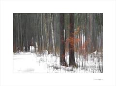 Waldgeist (E. Pardo) Tags: waldgeist bosque wald forest árboles trees bäume formas formen forms invierno winter nieve schnee snow