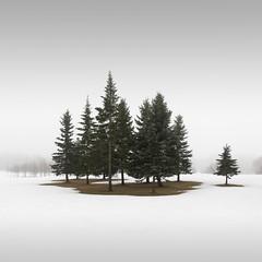 Winter Conifers III (Vesa Pihanurmi) Tags: trees woods conifers spruce fir winter snow nature espoo finland minimalism minimalistic