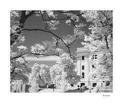 Breathe (agianelo) Tags: campus infrared trees monochrome bw bn blackandwhite