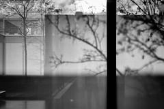 multilayered (fhenkemeyer) Tags: shadows light architecture tree museum folkwangmuseum essen nrw abstract
