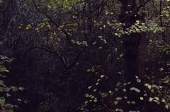 (Sietske de Graaf) Tags: forest woodland woods bos autumn fall november fallfoliage pentax vintageglass pentaxk50