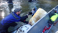 Removing floatation barrels from a weir