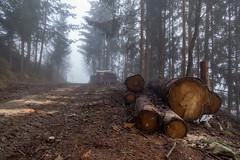 TRUNKS (LitterART) Tags: sonyrx100iv wald forest baumstämme trees trunks steiermark