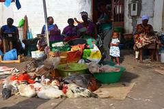marché Praia Cap vert_2928 (ichauvel) Tags: marché market animaux animals poules hens cochons pigs femmes women marchédesucupira praia capvert caboverde iledesantiago voyage travel exterieur outside vendeuses enfant child fillette littlegirl getty