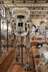 Elephas Maximus (just.Luc) Tags: skelet skeleton squelette éléphant elephant olifant parijs parigi paris îledefrance france frankrijk frankreich francia frança museum museo musée museet museu bones beenderen os europa europe