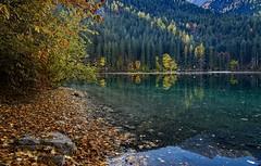 Angolo Autunnale (giannipiras555) Tags: autunno lago foliage natura foglie tovel trentino riflessi panorama paesaggio alberi montagna dolomiti landscape nikon