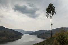 Extremo sur del lago Bunyonyi (Txaro Franco) Tags: africa uganda lago bunyonyi árbol paisaje landscape montaña montain lake nube nubes nwn