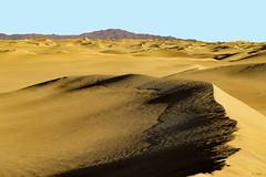 Al Faqa - Dubai (keltia17) Tags: desert désert desierto dunes sand sable gazelles uae dubai