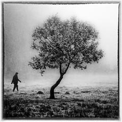 fog (Gian Mario Caboni) Tags: fog nebbia