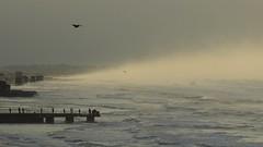 Птицы (unicorn7unicorn) Tags: море закат волны птицы wah 30
