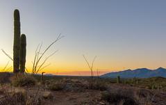 DSC_3374 (farajalhattab) Tags: arizona tucson sunset landscap cactus mountain nikon d7200