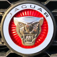 Jaguar (Timothy Valentine) Tags: squaredcircle 1219 large medallion logo 2019 automobile whitman massachusetts unitedstatesofamerica