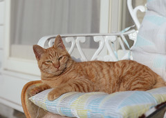 goose (Christine_S.) Tags: canoneosm5 japan lounging relaxing home warm neko chat kitten kitty efm32mmf14 autumn fall captainmarvel marvelcomics mcu straycat outdoorcat portrait
