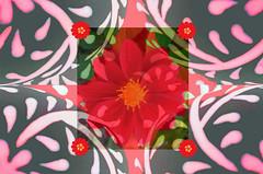 Flower Power (kfocean01) Tags: photoshop photomanipulation flower flowers pink colors nature frame orange netartll awardtree
