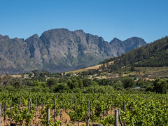 Cape Winelands (a_bygg) Tags: landscape mountains vineyard green southafrica westerncape winelands franschhoek