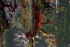 Gum Tree Abstracted. (maginoz1) Tags: gumtree abstracted art manipulate contemporary summer december 2019 bulla melbourne victoria australia indigenous canon eos r g3x