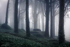 Dark Forest (jorgeverdasca) Tags: autumn trees mist portugal nature fog forest woodland landscape sintra goth ivy
