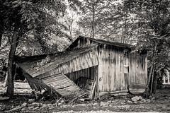 Shed Happens (Brad Prudhon) Tags: 2019 july old westvirgina abandoned barn fallingdown shed weathered wood