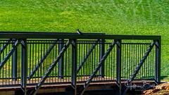 Fences (Jeffrey Balfus (thx for 6 Million views)) Tags: a9 sonyalpha sanjose california unitedstatesofamerica fences metallic