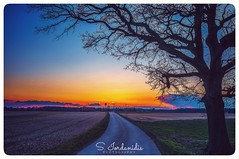 Sunset Tree (Stathis Iordanidis) Tags: sunset romanticsunset trees path sundown farm farmland countryside amazinglandscape nature serenity silence tranquility