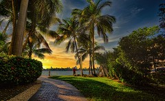 The sunset. (Aglez the city guy ☺) Tags: miamibeach seashore urbanexploration waterways outdoors lateafternoon afternoon walking walkingaround coconuttree trail path