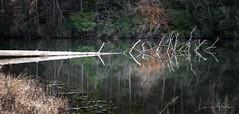 Life After Death (benemme) Tags: tall pines wildlife refuge lake fishing reflection still artistic hiking sc landscape nikon d750 70300mm light walk trail south carolina afternoon water pond