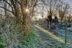 Morning Sun (enneafive) Tags: wellen morning light sun frost nature bucolic walkingtrail fence trees grass fujifilm xt2 affinityphoto fog cold