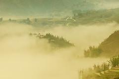 _MG_4382.0311.San Sả Hồ.Sapa.Lào Cai (hoanglongphoto) Tags: asia asian vietnam northvietnam northwestvietnam northernvietnam landscape scenery vietnamlandscape vietnamscenery sapalandscape spring sapaspring mist morning mountain flanksmountain house tophill canon canoneos5dmarkii tâybắc làocai sapa sansảhồ phongcảnh phongcảnhsapa buổisáng mùaxuân sươngmù sươngsớm sườnnúi ngôinhà đỉnhđồi village bảnlàng manyhouses nhữngngôinhà earlymorningfog mountainvillage canonef100400mmf4556lisusm sapasfog sươngmùsapa hoanglongphoto naturelandscape naturallandscapes