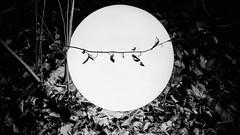 Line Dance (romeos115) Tags: light bw circle leaves show spotlight contrast